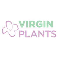 Virgin Plants